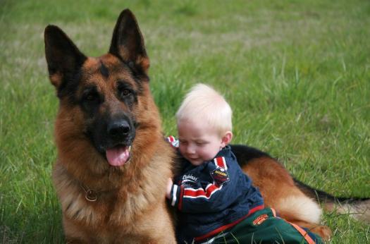 Эта собака обожает детей