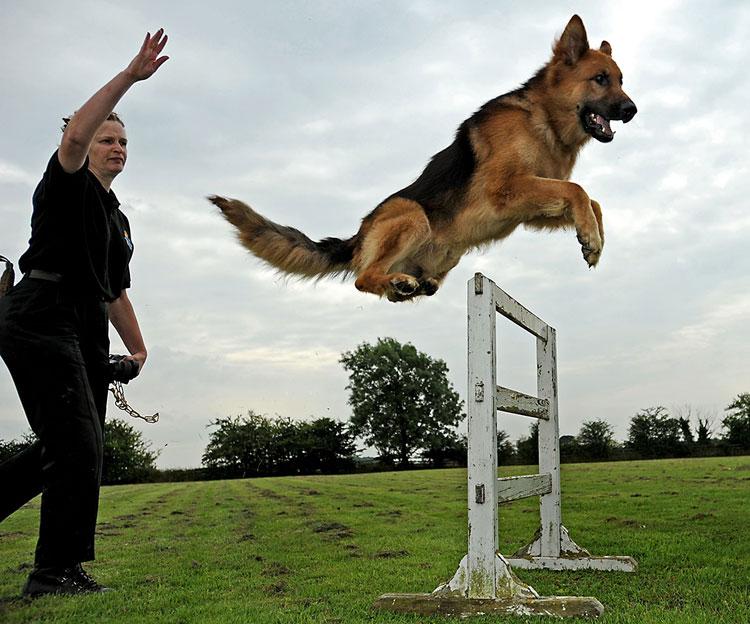 Собака с радостью воспринимает физические нагрузки