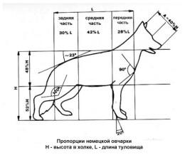 Стандарты породы немецкая овчарка