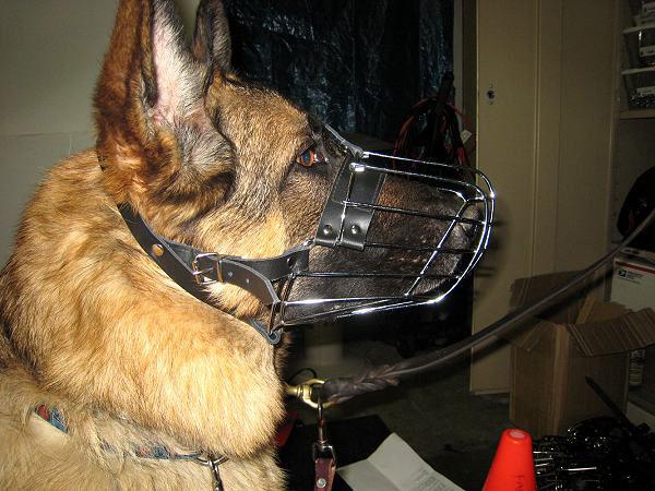 В металлическом ошейнике собака чувствует себя комфортно