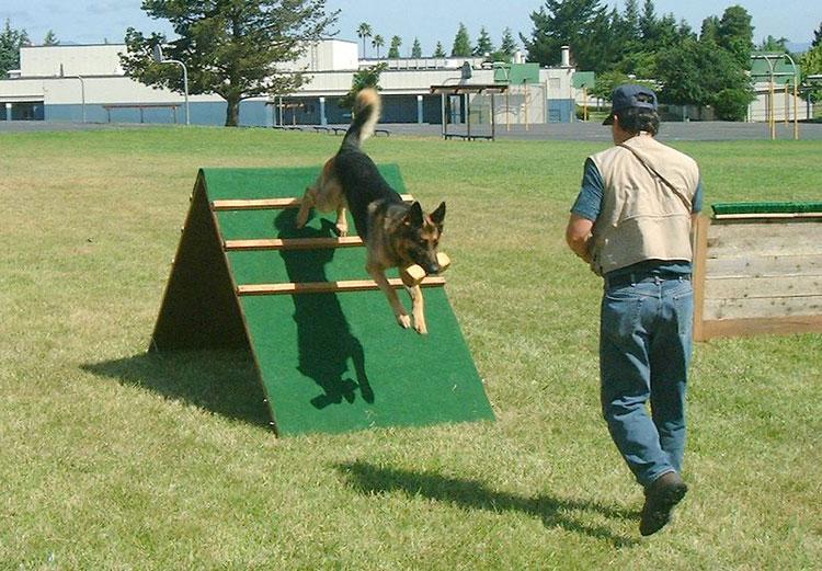 Занятия с собакой на площадке