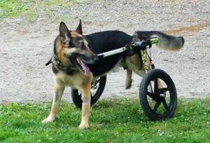 Собаке может помочь специальная конструкция