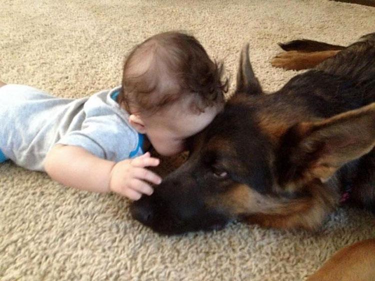 Овчарки терпимо относятся к детским шалостям