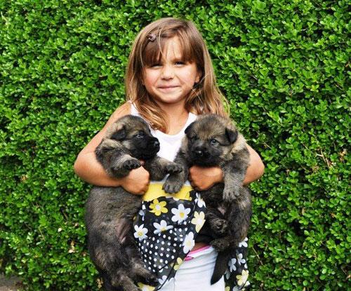 Выбор клички для щенка можно доверить ребенку
