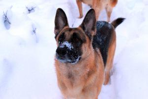 Гулять с собакой нужно в любое время года