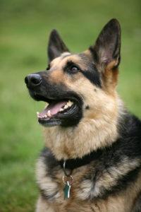 Ухаживайте за собакой правильно