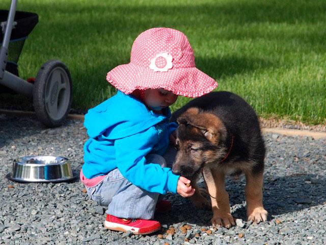 Ребенок и щенок - это уже два ребенка