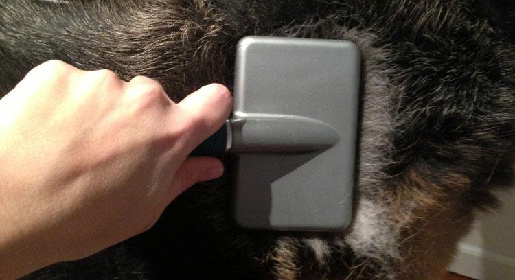 Чесать шерсть нужно специальной щеткой
