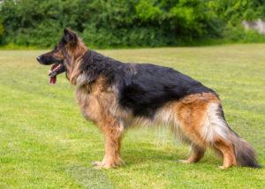 У взрослой собаки сорок два зуба