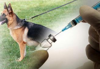 Здоровая собака вырастает из здорового щенка