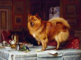 История породы померанский шпиц