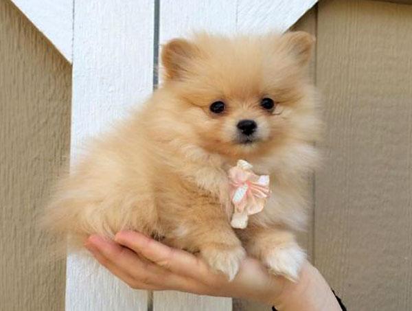 Чтобы щенок легче перенес смену обстановки, разговаривайте с ним спокойным тоном