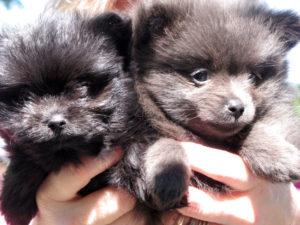 Выбирайте щенка в специализированном питомнике