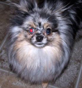 Проблемы с глазами - дисквалифицирующие пороки