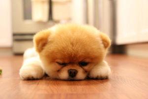 Чтобы щенок был бодр и весел, давайте ему выспаться