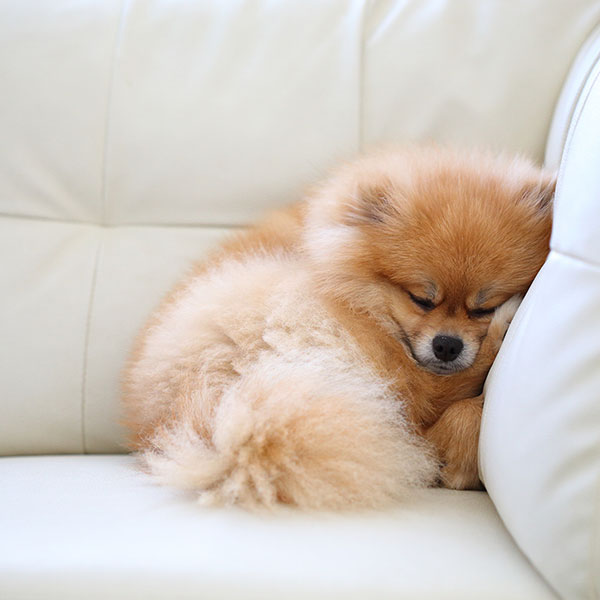 Спокойно спать собака сможет там, где никто ей не будет мешать