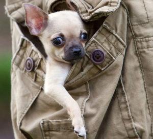 Сразу покажите щенку, кто в доме хозяин