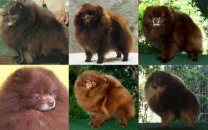 Разнообразие коричневого оттенка