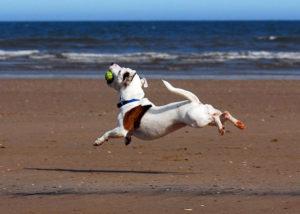 Движения собаки должны быть естественными