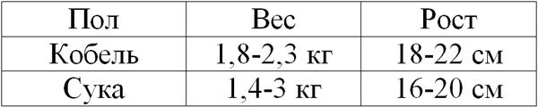 Таблица роста и веса померанского шпица