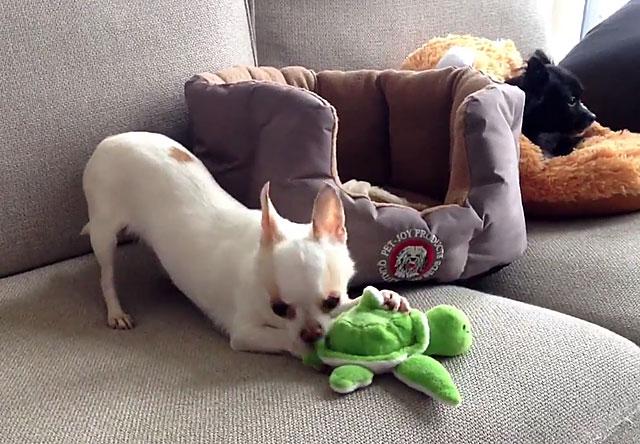 Выбирая игрушку, ориентируйтесь на темперамент собаки