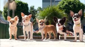 Фенотип собаки - это ее внешний вид