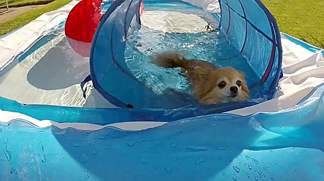 Эта собачка любит водные процедуры