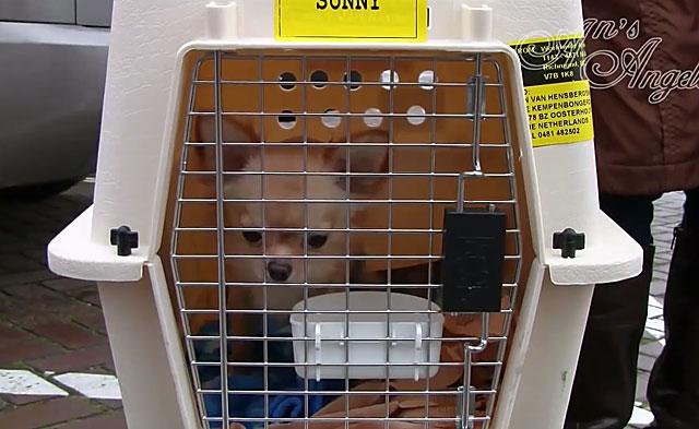 В контейнере собаку можно разместить со всеми удобствами