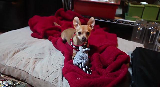 Собака с развлекающей игрушкой