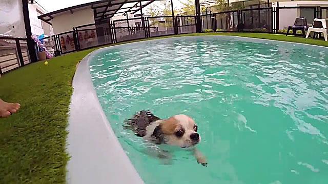 Собачка учится плавать