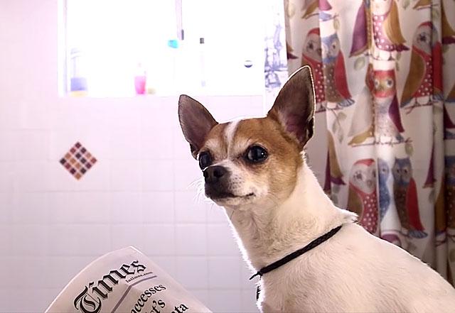 У кастрированной собаки меняется поведение