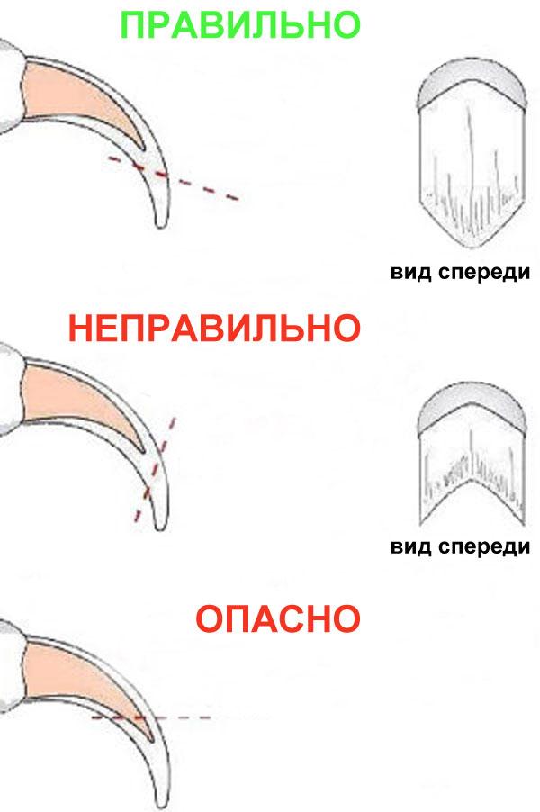 Схема стрижки когтя