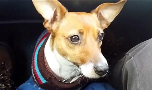 Теплая одежда защитит собаку в морозы