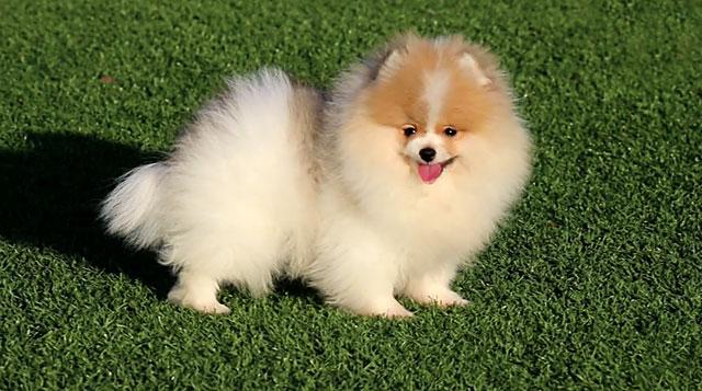 Аллергия на собак бывает врожденной и приобретенной