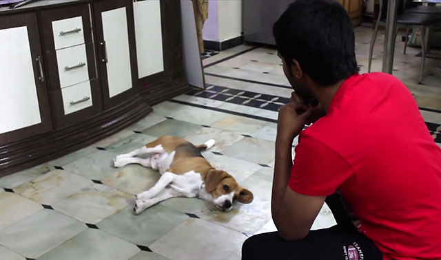 Важно добиться внимания собаки