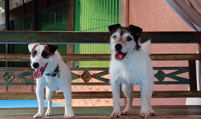 Для спаривания лучше выбирать собак одинакового роста