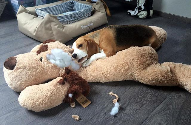 Щенок с мягкой игрушкой