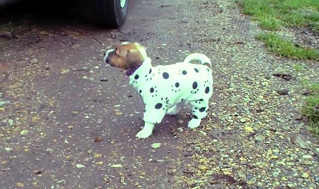 Одетый щенок