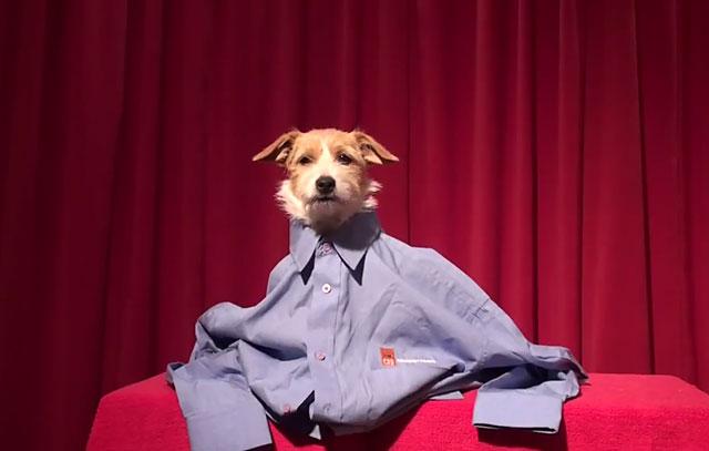 Одежда должна подходить собаке по размеру