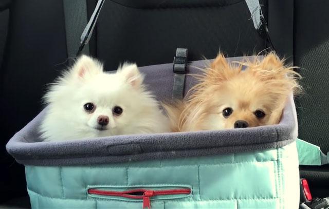 Собак для вязки отбирают очень тщательно