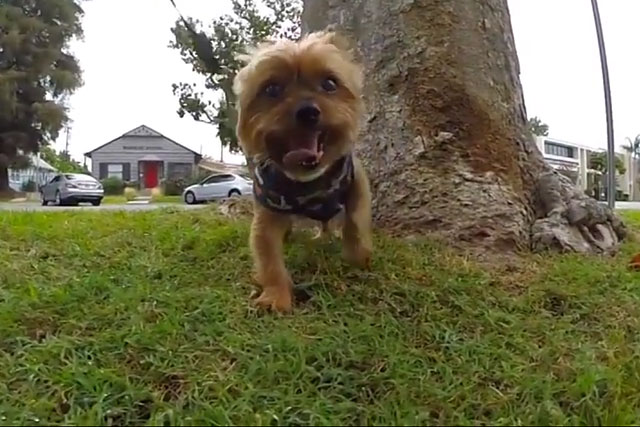 Со временем собака научится проситься на улицу
