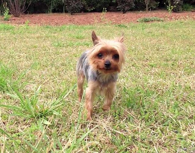 По возможности прививайте собаку в государственных клиниках