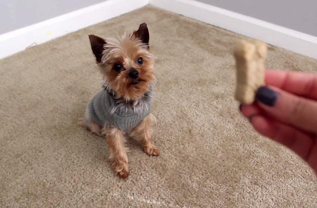 Поощряйте собаку за правильное выполнение команд
