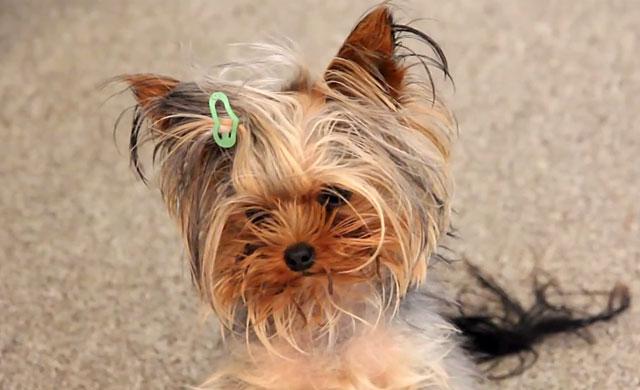 Для правильного ухода нужно знать возраст собаки