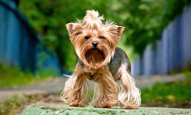Движения собаки должны быть легкими