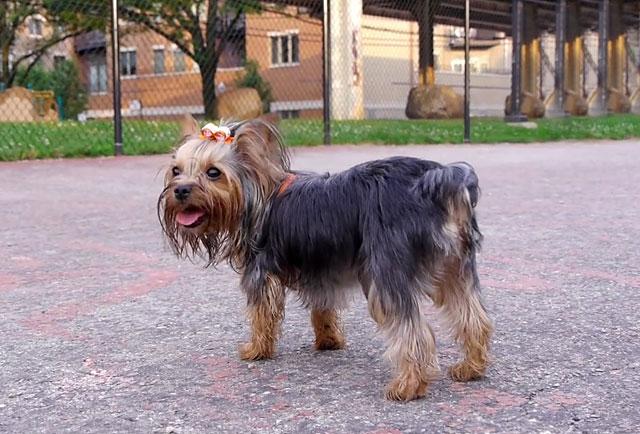 Наблюдайте за поведением собаки после прививки