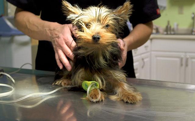 Нельзя делать прививки больной собаке