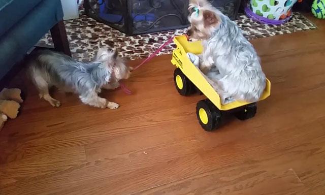 Подготовьтесь к появлению в доме собаки