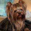 Если в доме если аллергик, не пускайте собаку на мебель