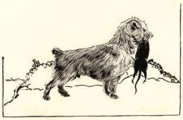 История породы йоркширский терьер